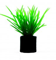 Eleocharis mini
